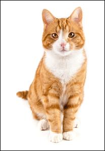 Greenwood cat sitter